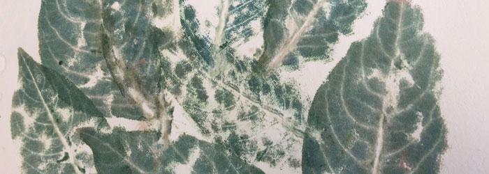 direkttyck av indigoblad, inför kalligrafiarbete